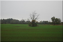 TF0611 : Isolated tree by N Chadwick