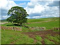 NY4839 : Pasture, Hesket by Andrew Smith