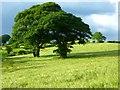 NY5355 : Farmland, Castle Carrock by Andrew Smith