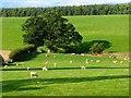 NY5526 : Pasture, Clifton by Andrew Smith