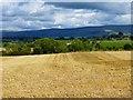 NY5533 : Farmland, Langwathby by Andrew Smith
