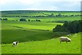 NY5645 : Pasture, Kirkoswald by Andrew Smith