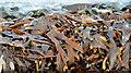 J4583 : Seaweed, Helen's Bay - February 2015(3) by Albert Bridge