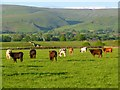 NY6033 : Pasture, Skirwith, Culgaith by Andrew Smith
