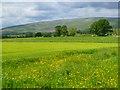 NY6131 : Farmland, Culgaith by Andrew Smith