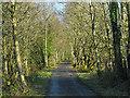 SH7018 : The Mawddach Trail east of Penmaenpool by Nigel Brown