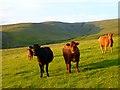 NY6433 : Pasture above, Kirkland, Culgaith by Andrew Smith
