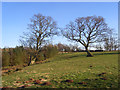 NY6530 : Pasture and woodland, Milburn by Andrew Smith
