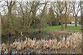 TL7404 : Small pond, Gablefields, Sandon by Roger Jones