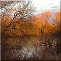 SK5235 : Morning light on Beeston Pond by David Lally