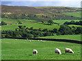 NY5454 : Pasture, Castle Carrock by Andrew Smith