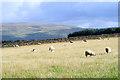 NY5741 : Pasture, Kirkoswald by Andrew Smith