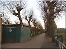 TQ2472 : Avenue of trees on Wimbledon Park by David Howard