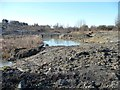 SE4609 : Pond on perimeter of disused tip, South Elmsall by Christine Johnstone
