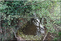 TM2350 : River Lark by N Chadwick