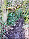 SE0722 : Muddy section of Elland FP01 by Humphrey Bolton