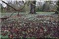 TL6669 : Snowdrops in Chippenham Park by Bill Boaden