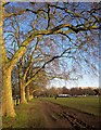 TQ2875 : Clapham Common by Derek Harper