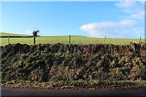 NX0983 : Farmland near Mains Hill by Billy McCrorie