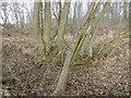 TF0527 : Former hedgerow by Bob Harvey