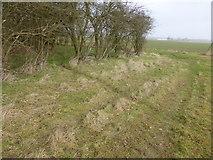 TF0627 : Deer track by Bob Harvey