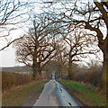 TL7808 : Trees and hedgerows on Tofts Chase, Little Baddow by Roger Jones