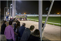 J2967 : Greyhound racing, Drumbo Park near Lisburn by Rossographer