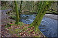 SX5160 : River Plym by jeff collins