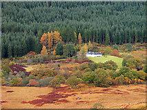 NN0550 : Hill slope descending in Glen Creran by Trevor Littlewood