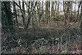 TL4462 : Woodland at Histon by Bill Boaden