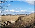 NZ4824 : Fence at field edge near to Cowpen Bewley by Trevor Littlewood