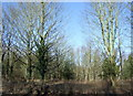 SE9955 : Woodland north of the A614 by JThomas