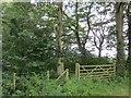 NY4537 : Wood near Hutton Bank by Richard Webb