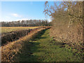 TL2089 : Edge of Holme Fen by Hugh Venables