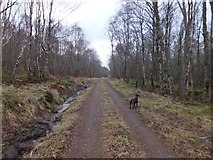 NH6751 : Track through Craigiehowe Wood by Alpin Stewart