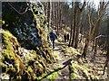 NO1219 : Woodland footpath by James Allan