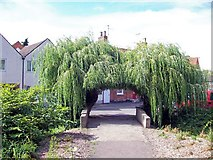 TF0920 : Willow arch at Bourne, Lincolnshire by Rex Needle