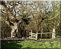 SD5306 : Stile at top of footpath into Dean Wood by Gary Rogers