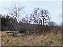 NH6762 : Ruin at Agnes Hill by Alpin Stewart