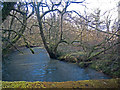 SS7312 : Looking down the Little Dart River from Cheldon Bridge by Roger A Smith