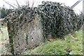 SU5984 : Covering of Ivy by Bill Nicholls