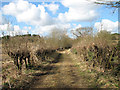 TG2806 : Hedge beside Cycle Route 1 to Whitlingham by Evelyn Simak