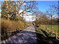 SJ8281 : Newgate Road by David Dixon