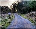 SJ8180 : Track to Saltersley Hall Farm by David Dixon