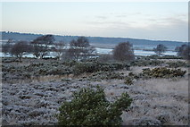 SZ0284 : Studland and Godlingston Heath National Nature Reserve and Poole Harbour by N Chadwick