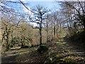 SX7988 : Path and bridleway, Cod Wood by Derek Harper