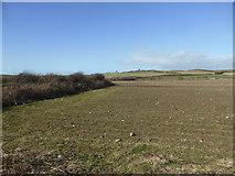 NY0106 : Fields near St Bridget's Church by David Medcalf