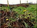 H4984 : Weeds, Gortin by Kenneth  Allen