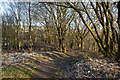 SD7314 : A footpath around the nature reserve by Ian Greig