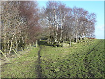 SE0722 : Path junction on the Calderdale Way by Humphrey Bolton
